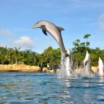 Discovery Cove: Swimming with Dolphins, Rays & Sharks