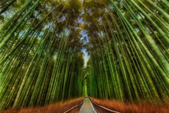 Bamboo forest... gorgeous, isn't it?