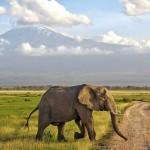 Rolling Around Nairobi, Kenya: A Wheelchair User's Travel Guide