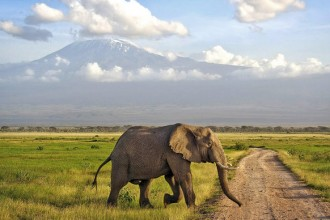 kenya_safari-elephant_amboseli