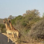 A Wheelchair Accessible Guide to Kruger National Park